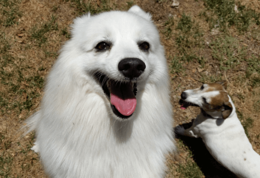 Two puppies smiling and playing