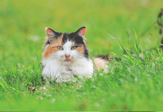 Cat resting in the green grass